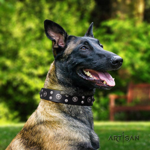 Belgian Malinois stylish walking full grain natural leather collar for your impressive pet