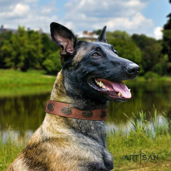 Belgian Malinois daily use natural leather collar for your beautiful four-legged friend
