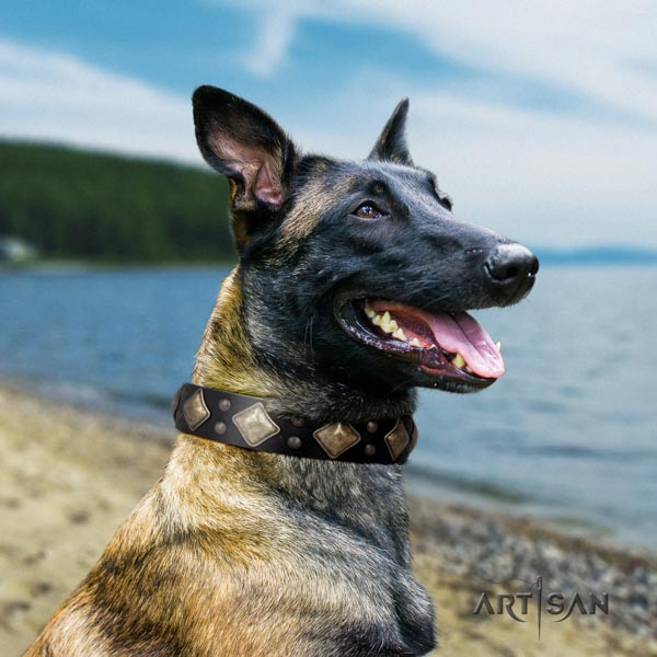 Belgian Malinois daily walking leather collar for your handsome canine