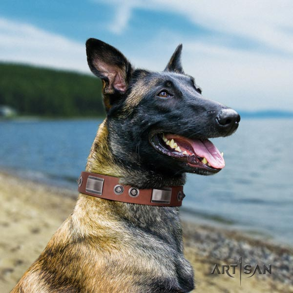 Belgian Malinois daily use leather collar for your impressive four-legged friend