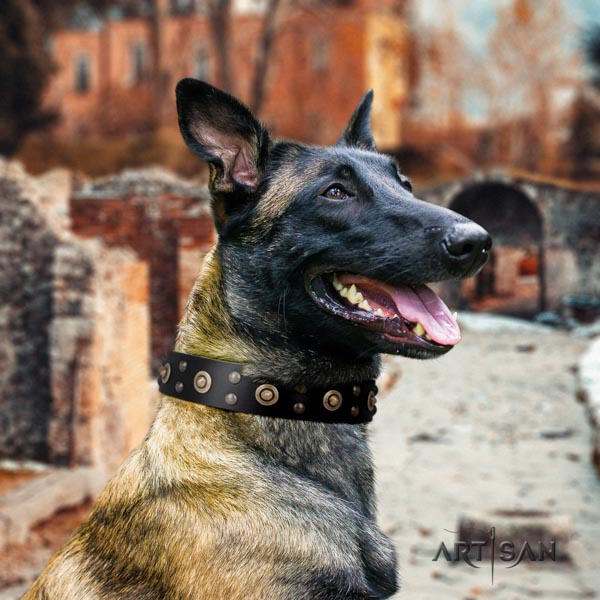 Belgian Malinois walking full grain natural leather collar for your handsome doggie