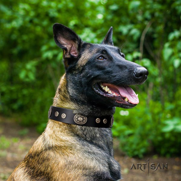 Belgian Malinois walking leather collar for your beautiful four-legged friend