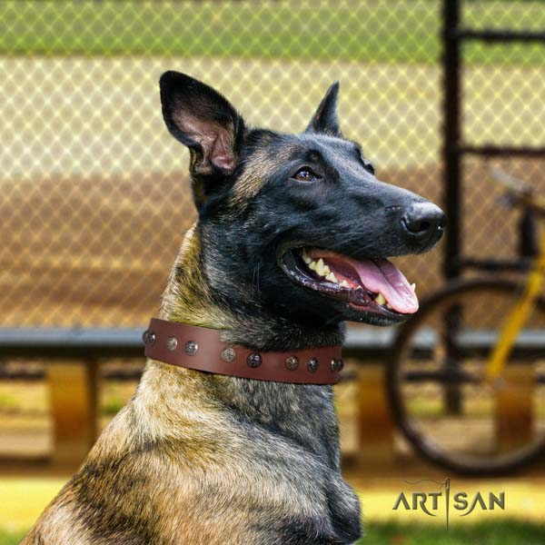 Belgian Malinois daily walking natural leather collar for your handsome doggie