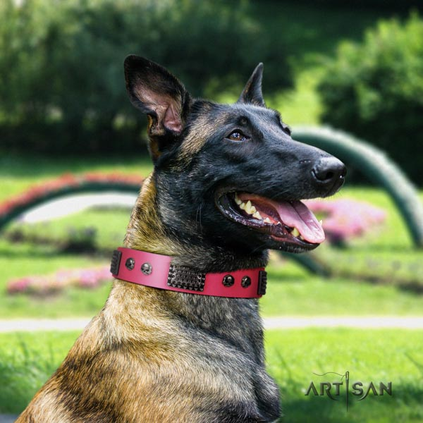Belgian Malinois walking full grain leather collar for your stylish canine