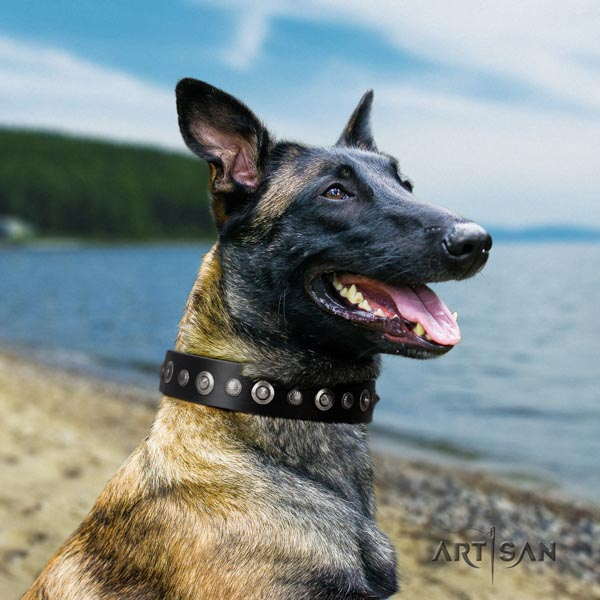 Belgian Malinois comfy wearing full grain natural leather collar for your impressive canine