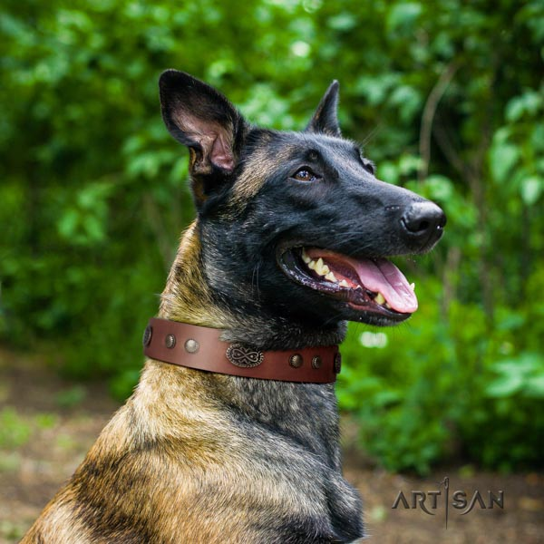 Belgian Malinois daily use full grain natural leather collar for your stylish doggie