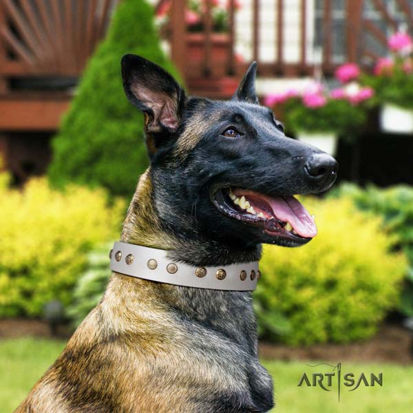 Belgian Malinois daily use natural leather collar for your lovely pet