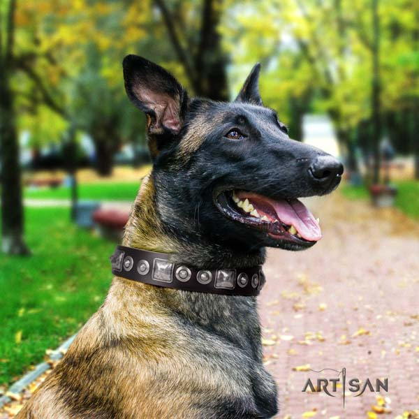 Belgian Malinois comfortable wearing full grain genuine leather collar for your beautiful four-legged friend