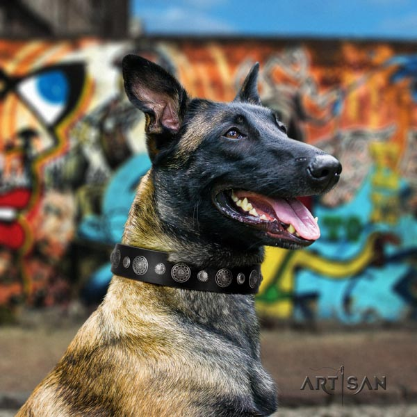 Belgian Malinois daily use full grain leather collar for your impressive pet