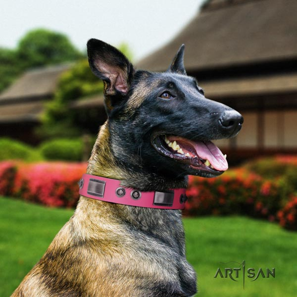 Belgian Malinois comfy wearing full grain leather collar for your attractive four-legged friend