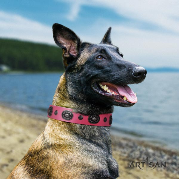 Belgian Malinois daily use natural leather collar for your handsome four-legged friend