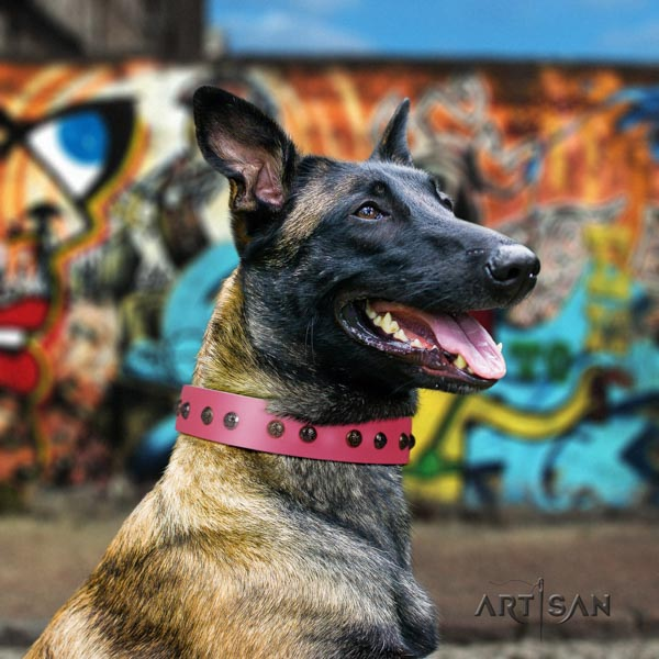 Belgian Malinois stylish walking full grain leather collar for your stylish dog