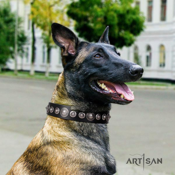 Belgian Malinois walking full grain leather collar for your handsome four-legged friend
