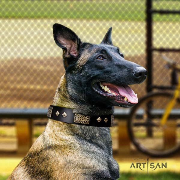 Belgian Malinois everyday walking natural leather collar for your handsome dog