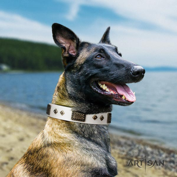 Belgian Malinois comfy wearing full grain natural leather collar for your lovely doggie