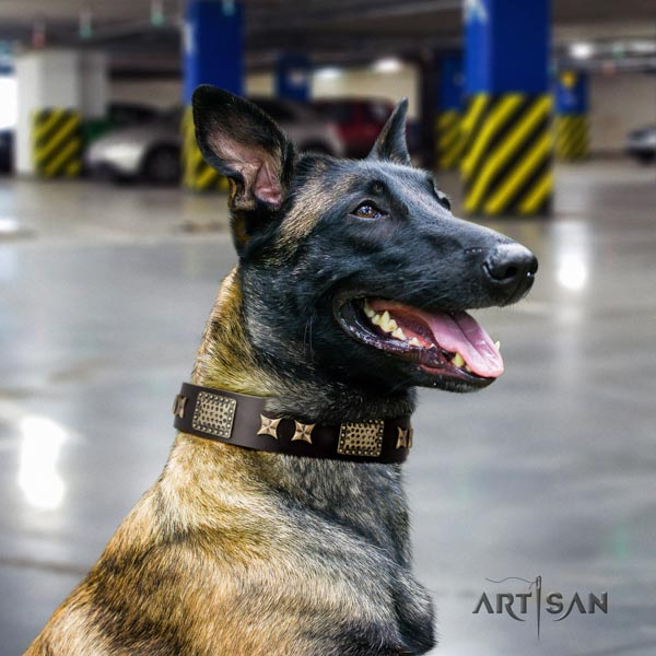Belgian Malinois everyday walking full grain leather collar for your beautiful doggie