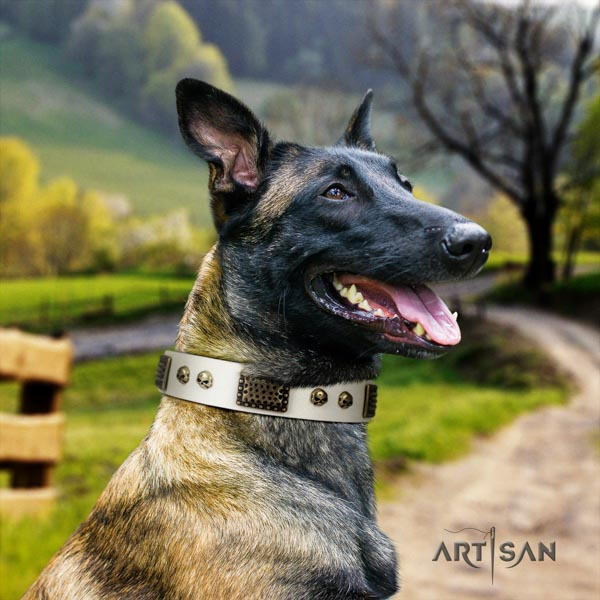 Belgian Malinois handy use leather collar for your lovely dog