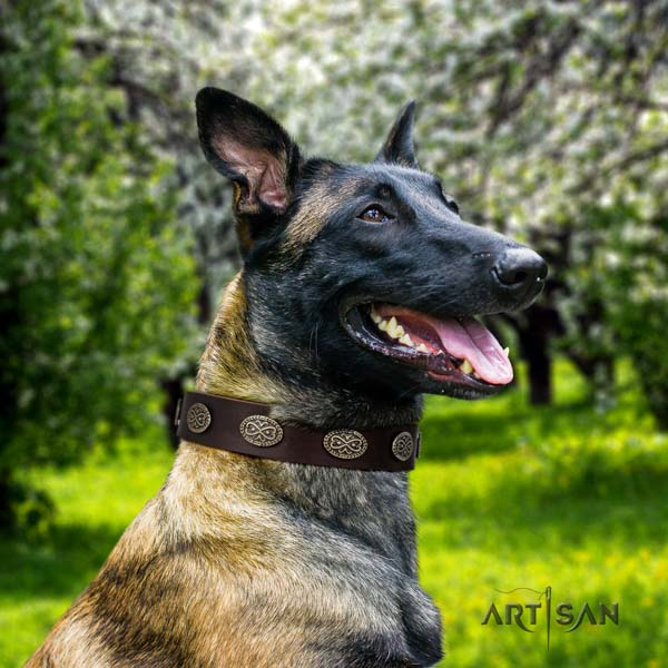 Belgian Malinois walking full grain leather collar for your handsome dog