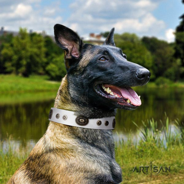 Belgian Malinois stylish walking leather collar for your beautiful doggie