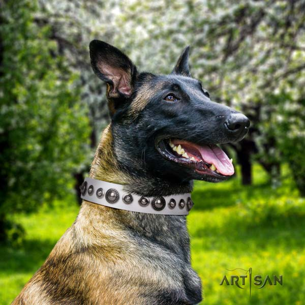 Belgian Malinois stylish walking full grain natural leather collar for your handsome doggie