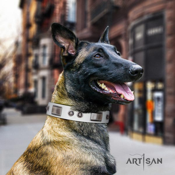 Belgian Malinois daily walking leather collar for your lovely pet