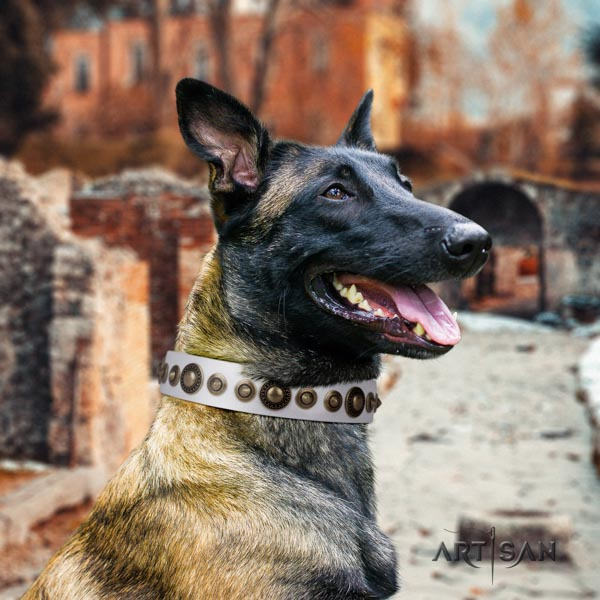 Belgian Malinois walking full grain genuine leather collar for your stylish canine