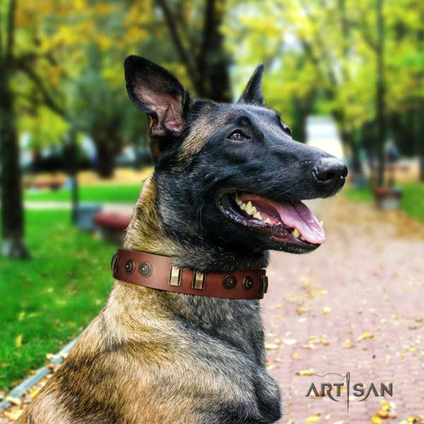Belgian Malinois fancy walking full grain leather collar for your impressive pet