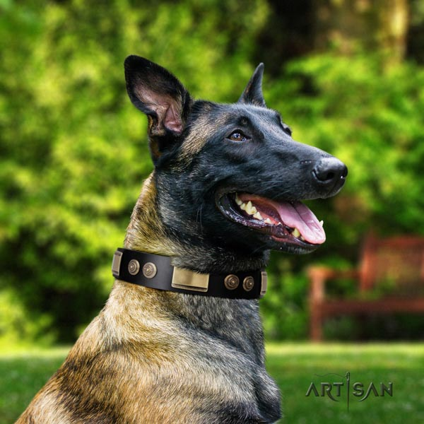 Belgian Malinois daily use full grain natural leather collar for your beautiful pet