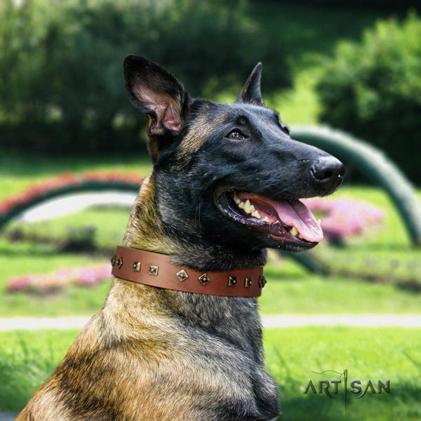 Belgian Malinois everyday use leather collar for your lovely four-legged friend