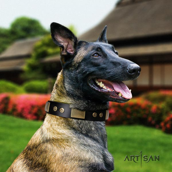 Belgian Malinois walking natural leather collar for your beautiful canine