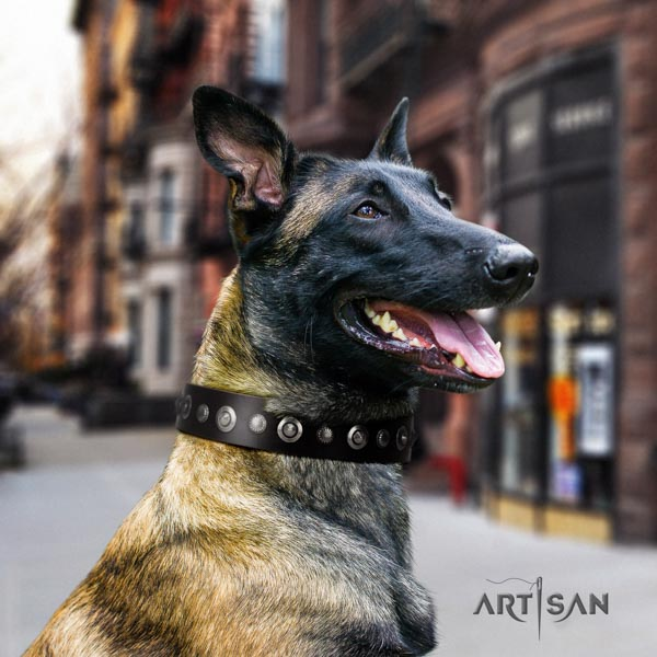 Belgian Malinois fancy walking full grain genuine leather collar for your attractive pet