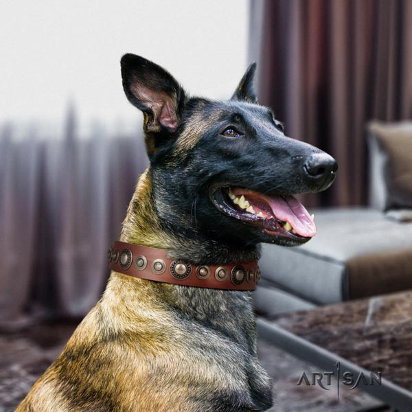 Belgian Malinois daily use full grain leather collar for your handsome pet