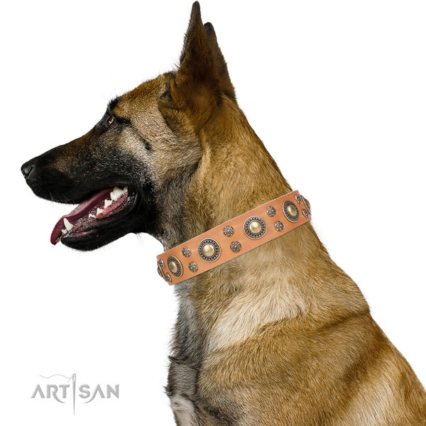 Belgian Malinois full grain genuine leather collar with reliable buckle for everyday walking