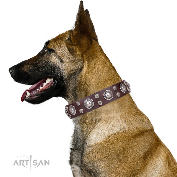 Belgian Malinois genuine leather collar with rust-proof D-ring for basic training