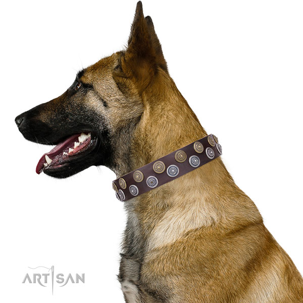Belgian Malinois natural genuine leather collar with reliable fittings for fancy walking