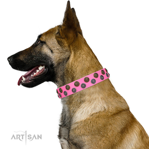 Belgian Malinois genuine leather collar with strong fittings for everyday walking