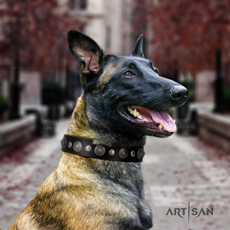 Belgian Malinois basic training full grain natural leather collar for your beautiful four-legged friend