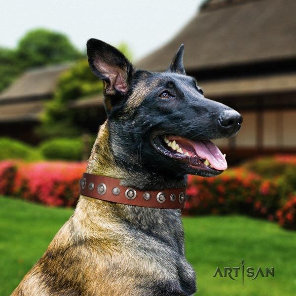 Belgian Malinois comfortable wearing natural leather collar for your beautiful dog