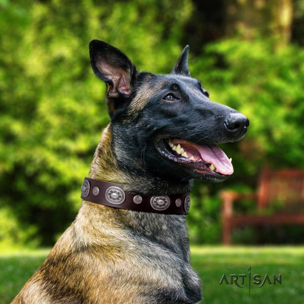 Belgian Malinois comfortable wearing natural leather collar for your beautiful canine