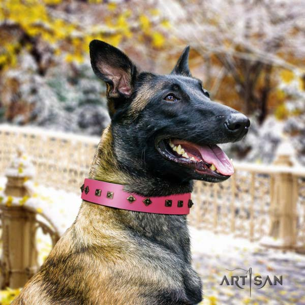 Belgian Malinois walking full grain natural leather collar for your handsome dog
