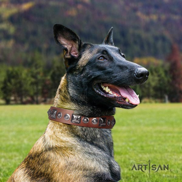 Belgian Malinois easy wearing genuine leather collar for your stylish canine
