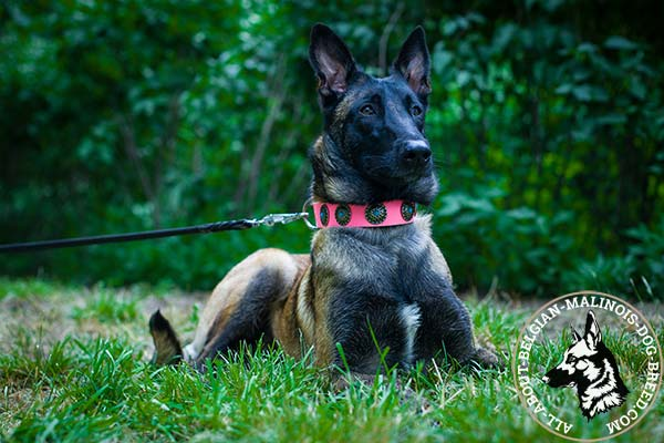 Belgian Malinois pink leather collar with durable fittings for stylish walks