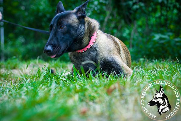 Belgian Malinois pink leather collar of high quality with spikes for daily walks