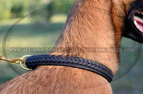 Fancy Hand Made Braiding on Walking Leather Dog Collar