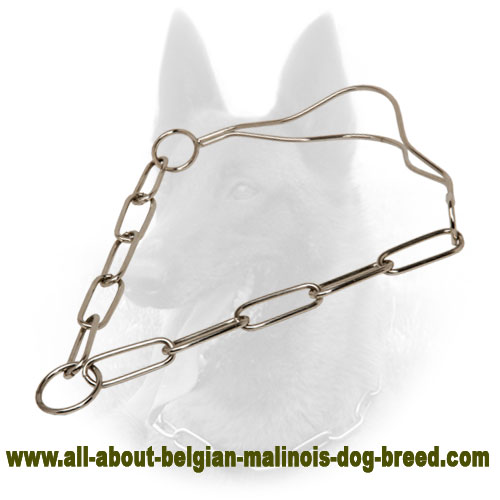 Strong Belgian Malinois Collar of Chrome Plated Material