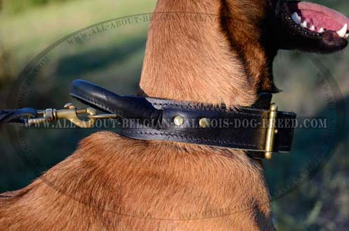 Rust Proof Nickel Plated D-Ring on Leather Dog Collar for Leash Attachment