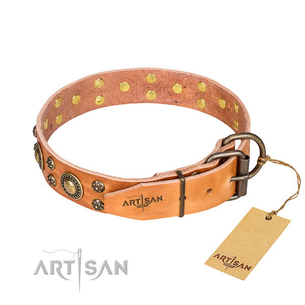 Walking genuine leather collar with studs for your dog