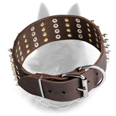 Bold Belgian Malinois Collar with Stylish Decoration