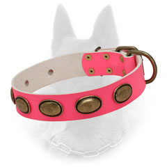 Trendy Belgian Malinois Collar of Leather with Adjustable Hardware