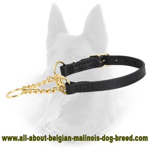 Trendy Belgian Malinois Collar of Black Leather